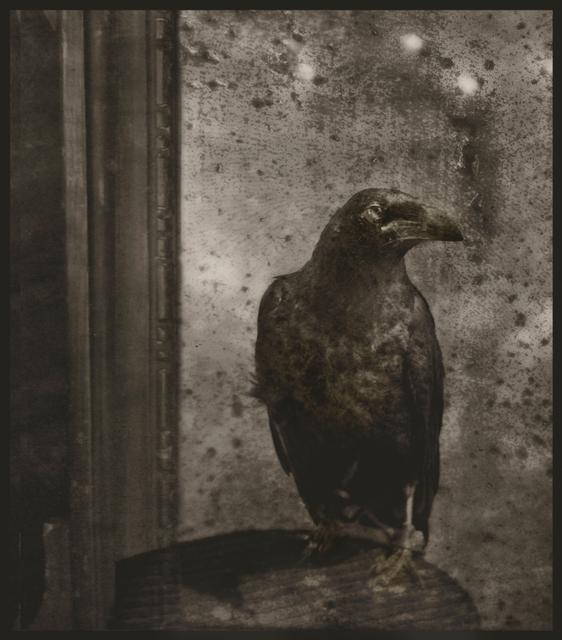 , 'Raven on A Table,' 2012, Paraphé