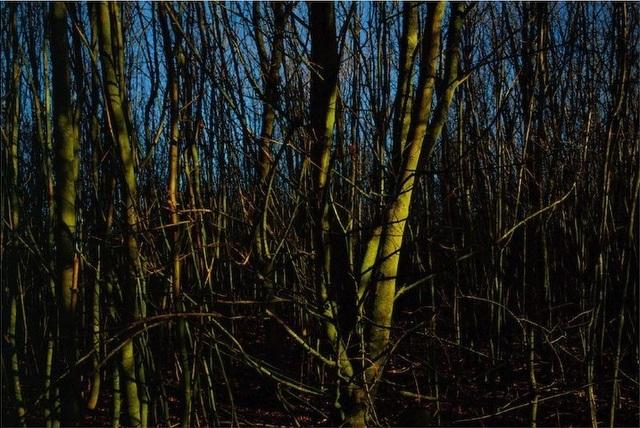 , 'Ash, Suffolk,' 2011, Osborne Samuel