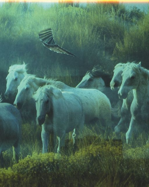", 'Horses, from the series ""A few days more"",' 2008, CHRISTOPHE GUYE GALERIE"