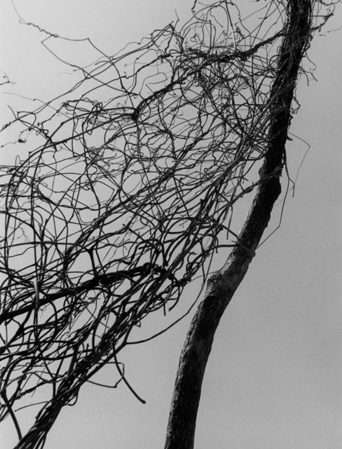 Bohnchang Koo, 'Breath 07', 1995, Three Shadows +3 Gallery