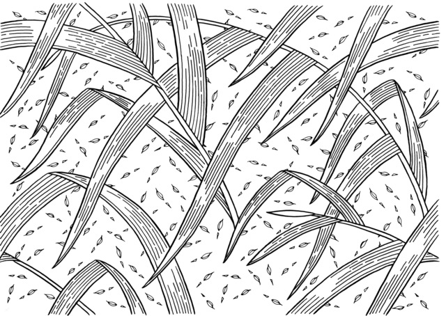 , 'Quick Lovegrass - Inked Drawings ,' 2017, Chan + Hori Contemporary