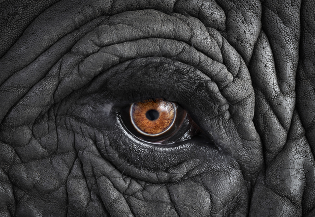 , 'African Elephant #11, Monterey, CA,' 2010, photo-eye Gallery