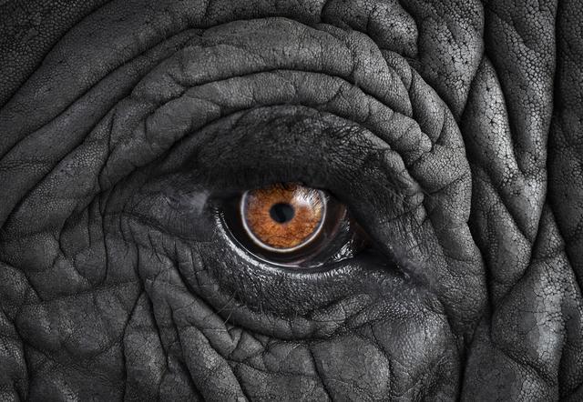 , 'African Elephant #11, Monterey, CA,' 2010, photo-eye Gallery