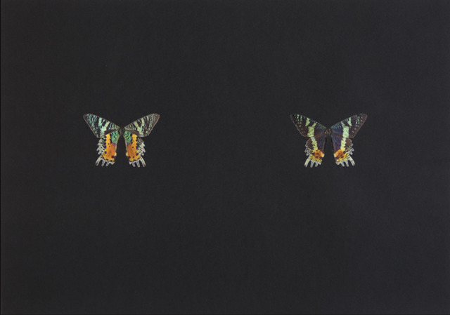 , 'Black Butterfly-Print #9,' 2017, Galerie Lisa Kandlhofer