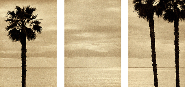 , 'Palm Tree Triptych (3 seperate prints),' 2006, Susan Spiritus Gallery