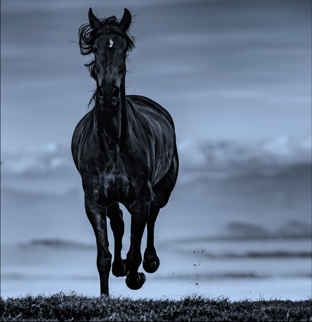 David Yarrow, 'Black Beauty', 2019, Hilton Asmus