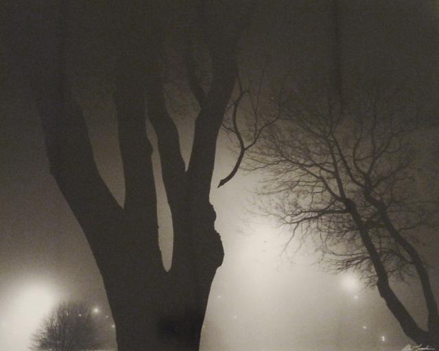 Alex Fradkin, 'Tree at Night', Chicago Art Source