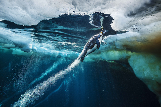 , 'Evolve,' , Paul Nicklen Gallery