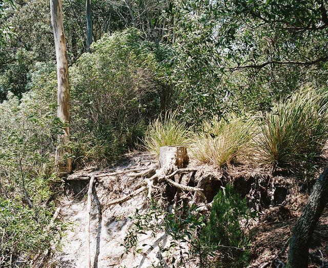 , 'Bush Landscape #4 ,' 2016, OLSEN GALLERY