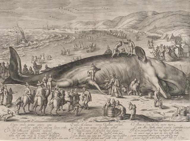, 'Gestrandeter Wal,' 1598, Kunstmuseum Basel