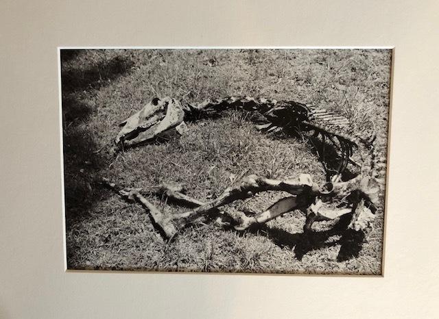 Manuel Álvarez Bravo, 'Ruina', Not Dated, Susan Spiritus Gallery