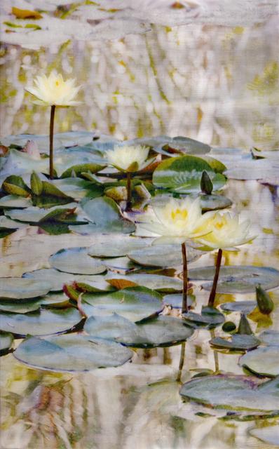 , '73 Lotuses,' 2016, Gallery Henoch