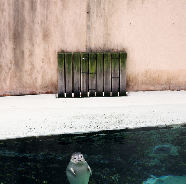 , 'Seal on the surface,' , Galerie Dumonteil