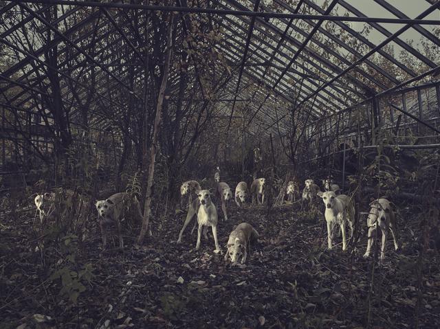 , 'Kerberos Total,' 2014, WILLAS Contemporary