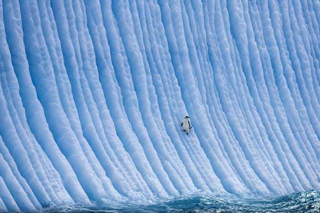 Paul Nicklen, 'Higher Ground', 2007, Paul Nicklen Gallery