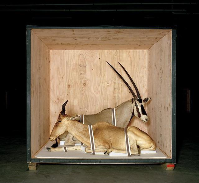 Richard Barnes, 'Smithsonian Antelope From Animal Logic', 2005, Bau-Xi Gallery