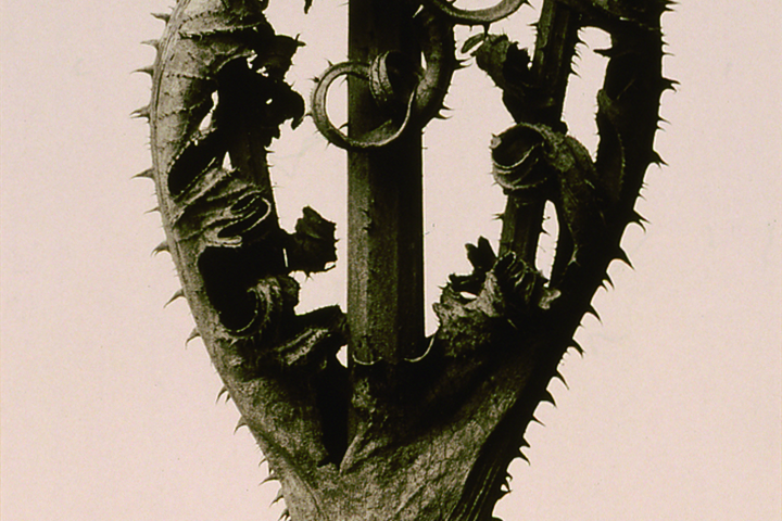 Karl BLOSSFELDT(1865-1932)