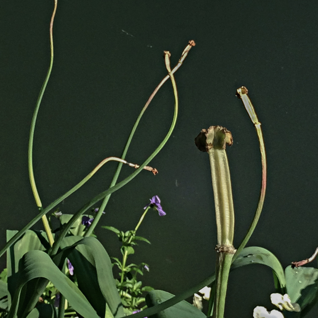 , 'Dancing Tulip Stems 1,' , Adah Rose Gallery