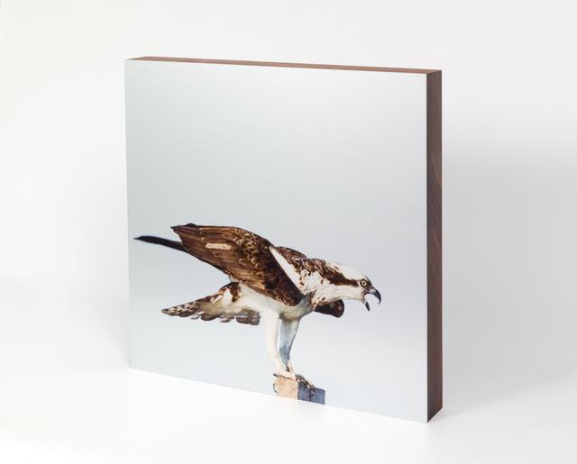 Renate Aller, 'Osprey #1', 2016, Independent Curators International (ICI) Benefit Auction