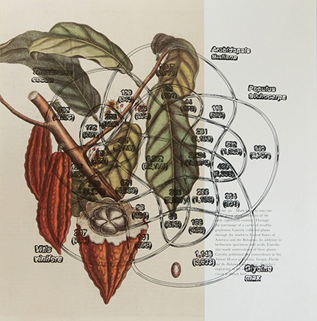 , 'Cocoa plant (Mark Catesby: 1754) + Shared gene family of cocoa (2010),' 2017, Umberto Di Marino