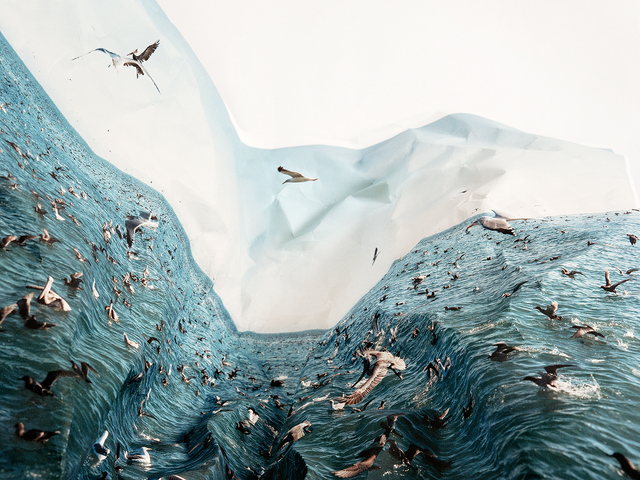 Laura Plageman, 'Feeding Frezy', 2012, Photography, Digital pigment print, De Soto Gallery