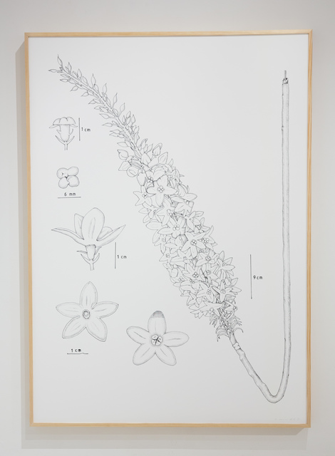 , 'PIT#14 S ORIENTALIS (HORSETAIL),' 2013, Chan + Hori Contemporary