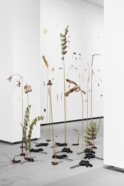 Andrea Acosta, 'JARDÍN ASISTIDO (ASSISTED GARDEN)', 2018, REITER