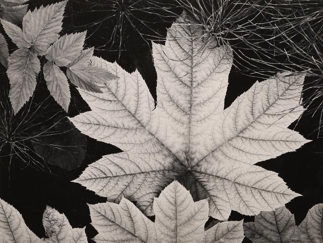 , 'Leaf, Glacier Bay,' 1948, Seagrave Gallery