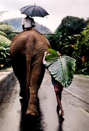 Young Man Walks Behind Elephant, Sri Lanka