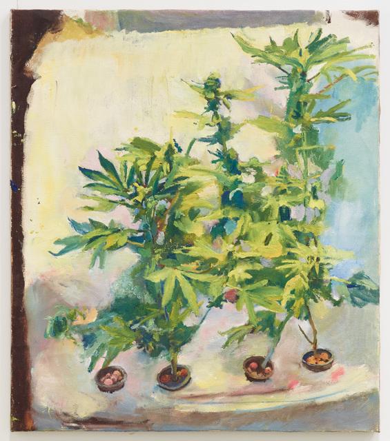 , 'Pot Plants,' 2010, Diane Rosenstein
