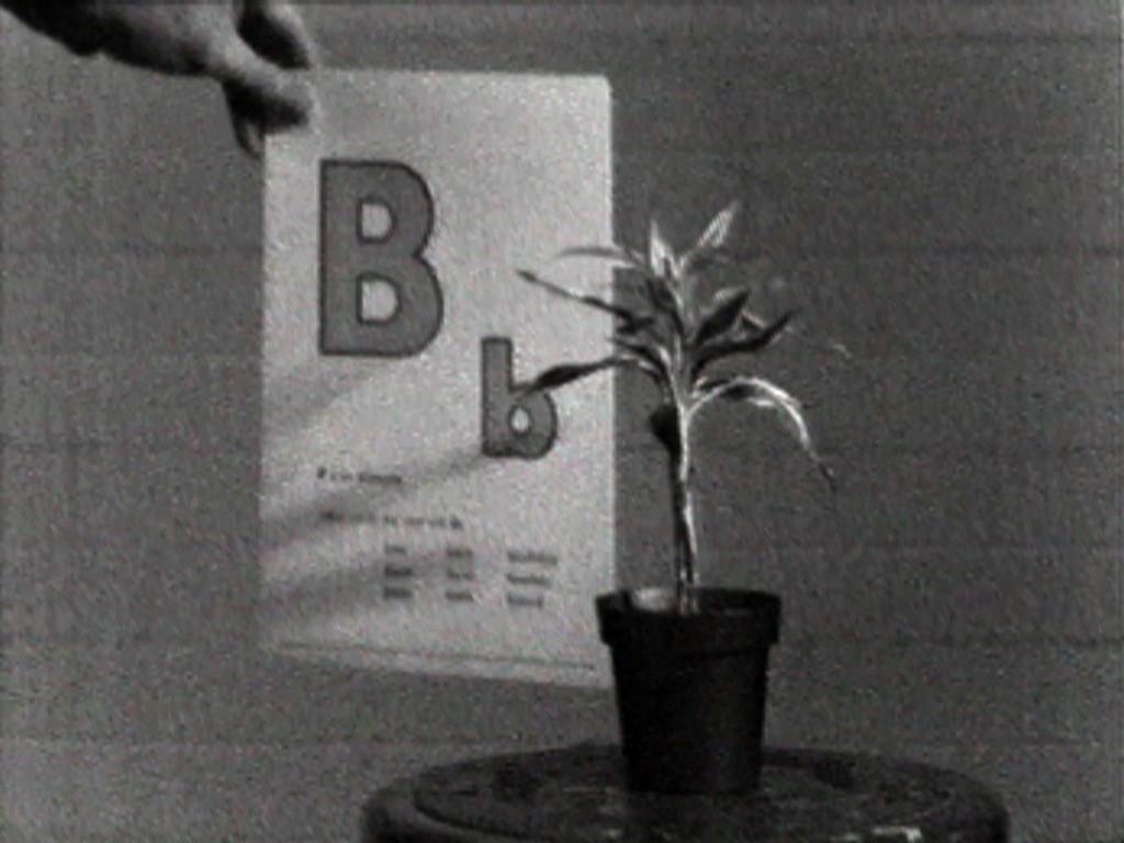 Teaching a Plant the Alphabet