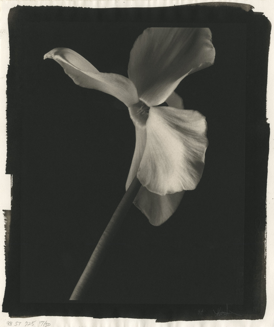 , 'Still Life #725,' 1998, Photography West Gallery
