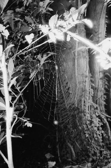 , 'Spinnennetz No.4,' 2004, Lange + Pult