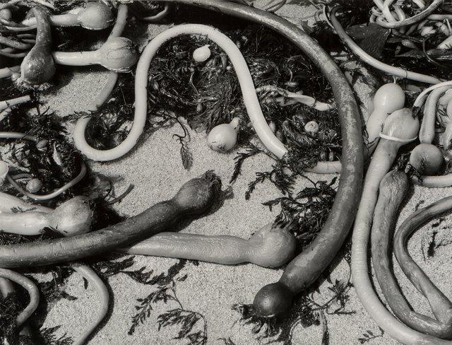 Brett Weston, 'Kelp', 1954, Heritage Auctions