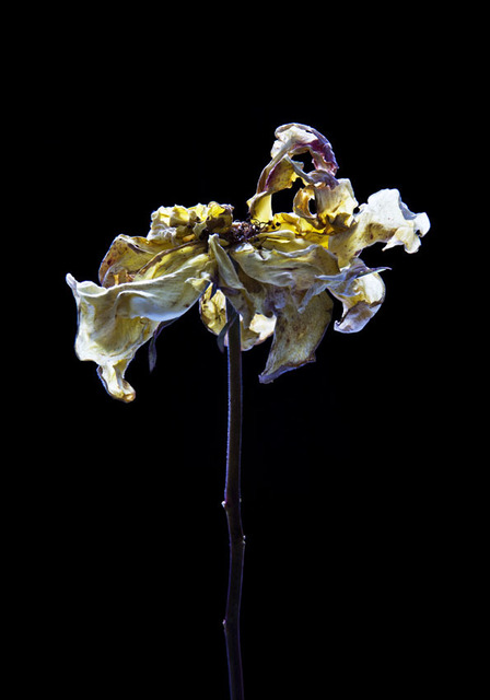 , 'Hortus Nocturnum,' , Arusha Gallery