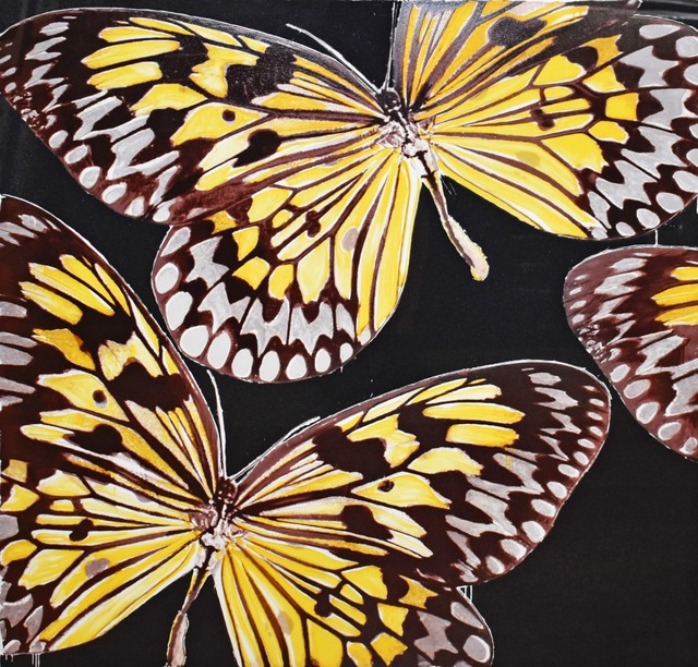 Donald Sultan, 'Monarchs', 2006, Georgetown Frame Shoppe