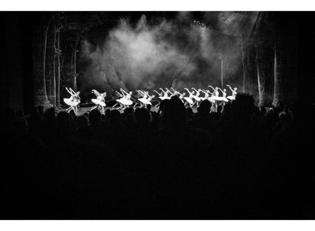 "MIKAEL THEIMER, '""Les cygnes""', 2017, Art Traffik"