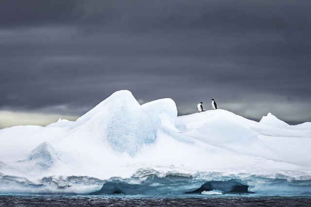 , 'Adelies on Ice,' , Paul Nicklen Gallery