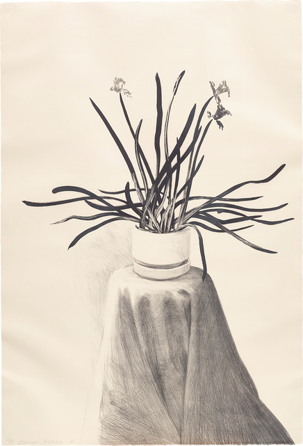 David Hockney, 'Potted Daffodils', 1980, Phillips