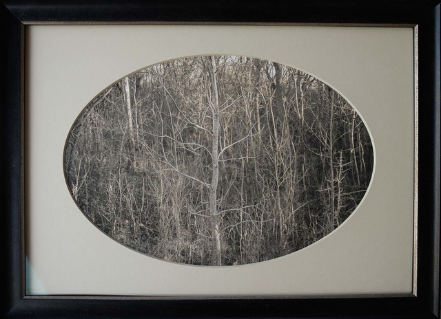 , 'Pale Sapling, Swamp, Plum Creek, Texas,' , Etherton Gallery