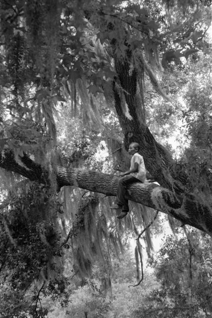 Constantine Manos, 'Untitled, Island Boy, Daufuskie Island, South Carolina (boy in tree)', 1952, Robert Klein Gallery