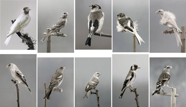 Carsten Höller, 'Untitled (Birds) (A - J)', 2006, Gagosian