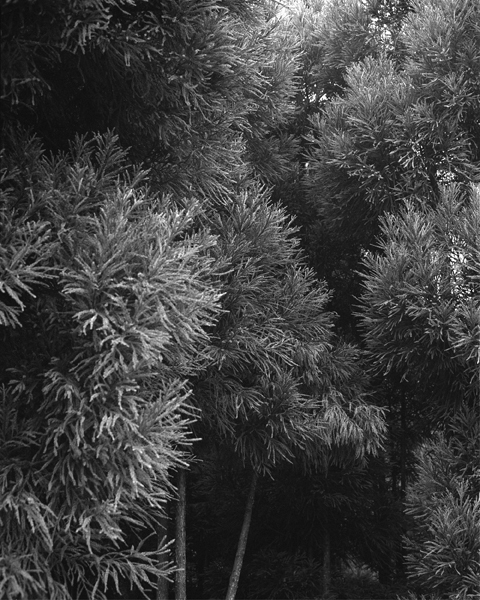 , '#412-9  ,' 2013, Foam Fotografiemuseum Amsterdam