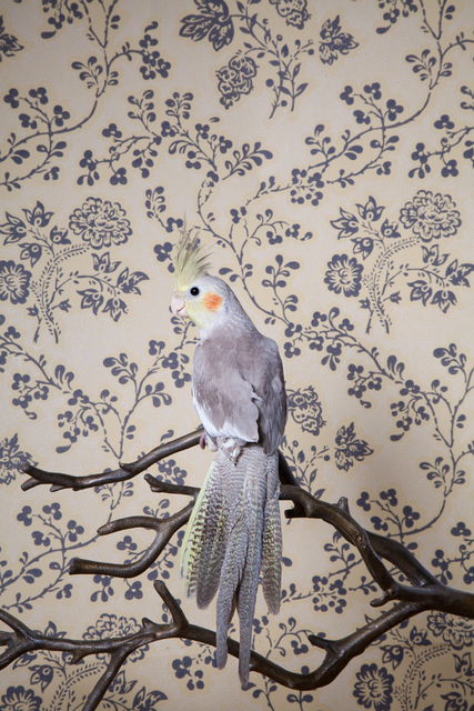, 'Gray Cockatiel No. 7905,' 2012-2018, Foto Relevance