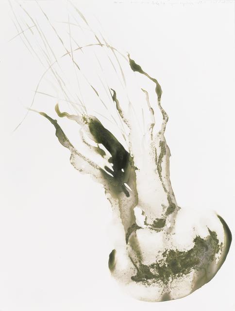 , 'Lion's Mane Jellyfish (Cyanea capillata),' 2014, Parrish Art Museum