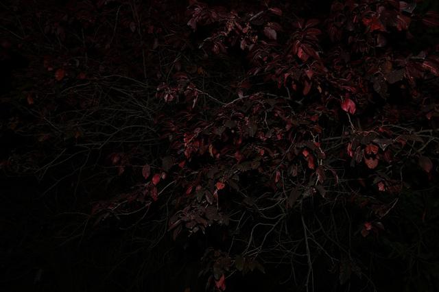 , 'Fade-to-Black 05,' 2014, Migrant Bird Space