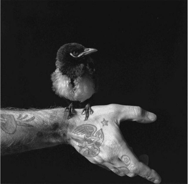 , 'No solo pájaros en la cabeza,' 2005, Galería Juana de Aizpuru