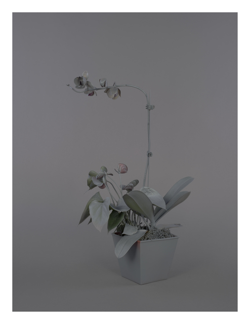 , 'Neutral Orchids (Dendrobium),' 2016, Catharine Clark Gallery