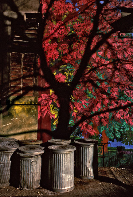 , 'Pink Tree, Avenue B, New York,' 1980, Inda Gallery