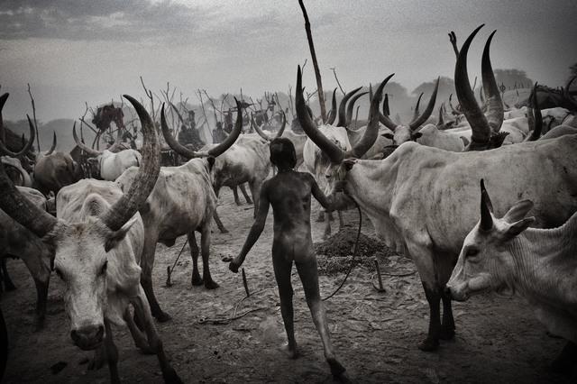 , 'Herder,' 2011, ILEX Gallery